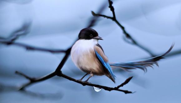 Cambios genéticos en aves darán pistas sobre enfermedades humanas