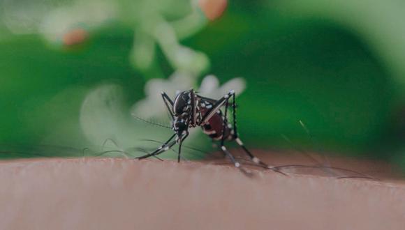 Regiones de Loreto y Ucayali presentaron rebrote de dengue  (Foto referencial: Pexels)