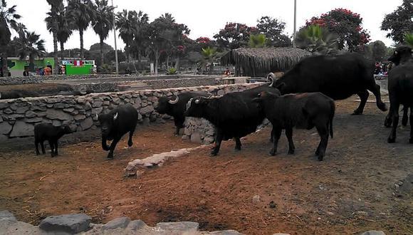 Parque de las Leyendas: ¡Sacrifican animales para alimentar a otros!