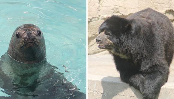 Dos animalitos cumplen años en el Parque de las Leyendas