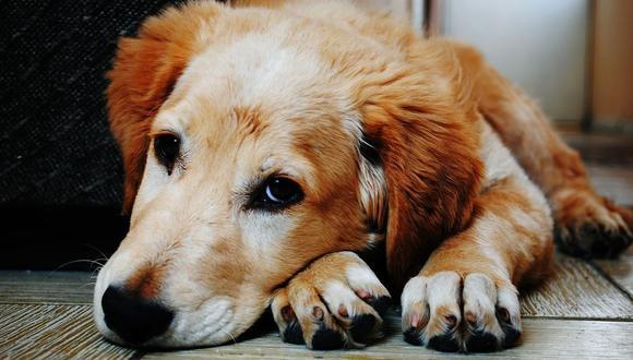 Si tienes una mascota, debes saber que es importante tenerlo bien cuidado (Foto: Pixabay)