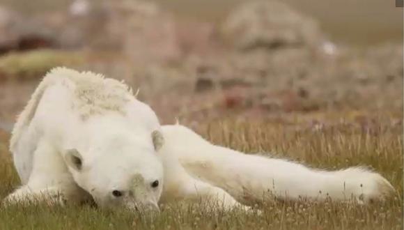 La desgarradora imagen del oso polar que conmueve al mundo (FOTO)