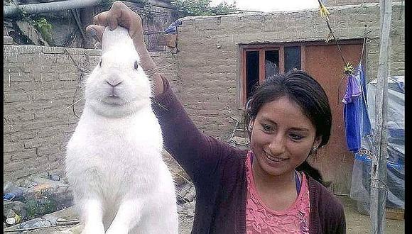 Huaura: Conejo travieso se escapaba de su casa para consumir marihuana
