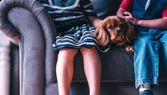 Los perros no transmiten Coronavirus. (Foto: Pixabay)