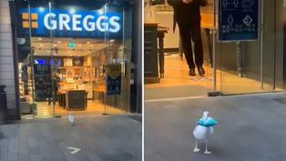Viral: ave roba en minimarket mientras todos están distraídos