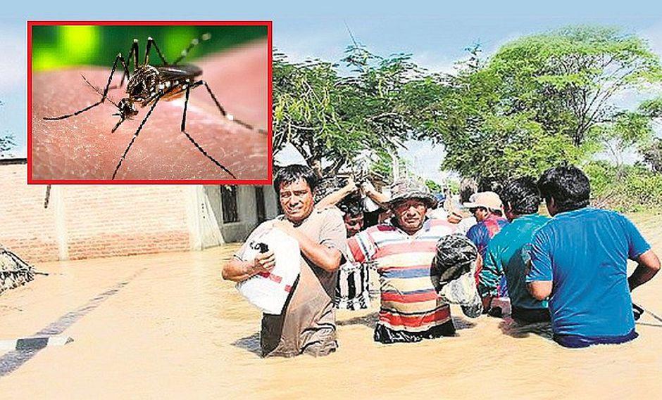 ¡Piura es atacada por el dengue! Zancudo anda suelto en zonas inundadas