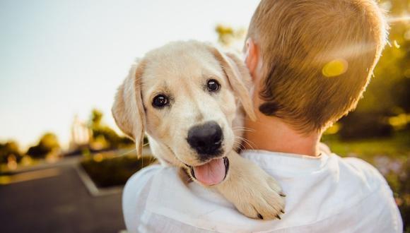 Hay un gran vínculo entre mascotas y niños. (Foto: Cortesía)