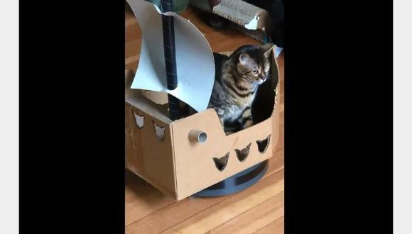 Como de película, el gato pudo convertirse como un personaje de Piratas del Caribe.