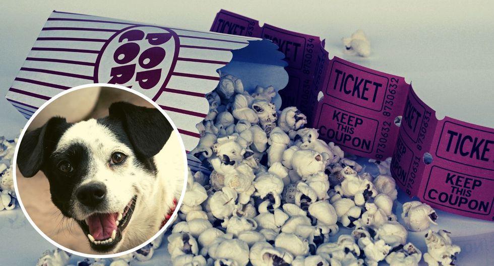 Podrás ir con tu perrito al cine: Anuncian primera función Pet Friendly en el Perú | VIDEO