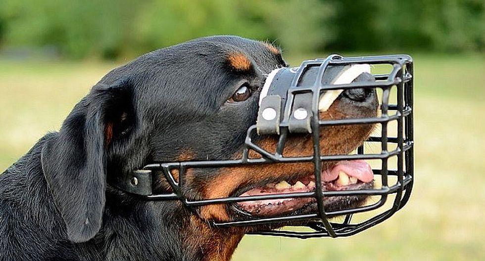 """Congresista fujimorista propone seguro obligatorio para """"canes peligrosos"""""""