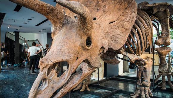 La gigantesca calavera mide dos metros de ancho, y la estructura cuenta con unos 200 huesos.