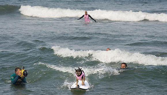 Perros surfistas invaden como cada año una playa de EE.UU. [FOTOS]