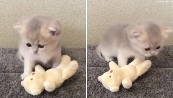 El video del gato conmovió a muchos y desesperó a otros. (Foto: Rumble Viral | YouTube)