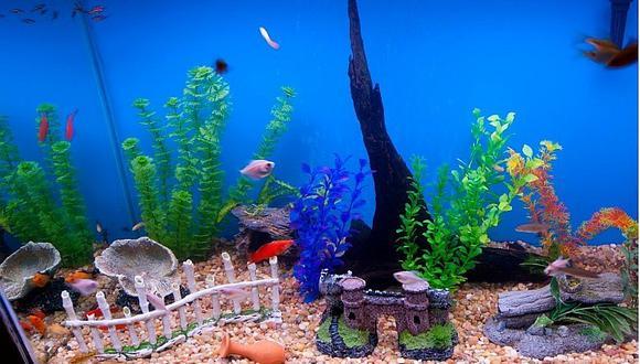 Peces: 4 pasos para limpiar un acuario