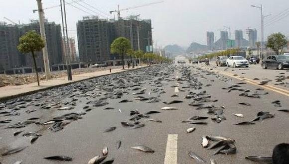 ¡Rarísimo! Conoce el misterio de la lluvia de peces en Honduras
