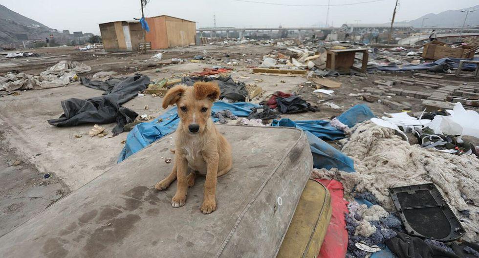 Cantagallo: shipibos abandonan a sus mascotas tras dejar terreno (FOTOS y VIDEO)