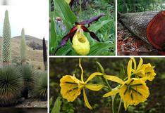 Conoce las 10 plantas en extinción del Perú