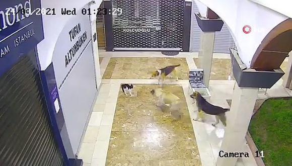 Un cachorro fue rescatado por su madre, quien le hizo frente a tres perros callejeros. (Foto: Captura de pantalla)