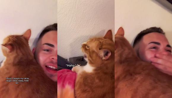 Un video viral muestra cómo un gatito es capaz de reírse como si fuera un humano.   Crédito: @maseplace / TikTok