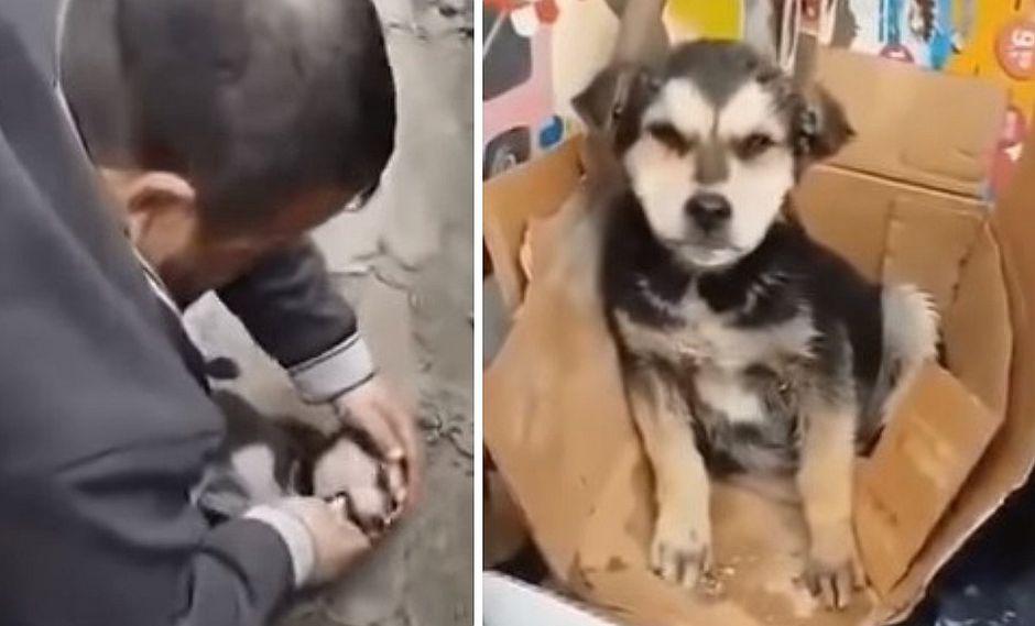 Hombre le da respiración boca a boca a un perrito para salvarle la vida  (VIDEO)