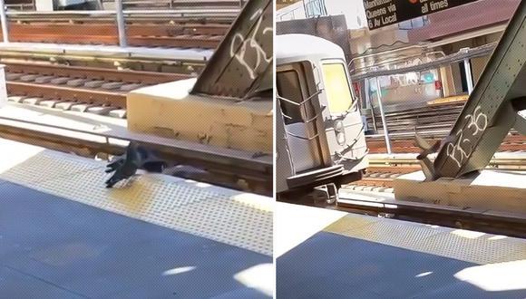 Dos palomas acorralan y empujan a otra de las aves a los rieles del tren de Nueva York. (Foto: Captura de video)