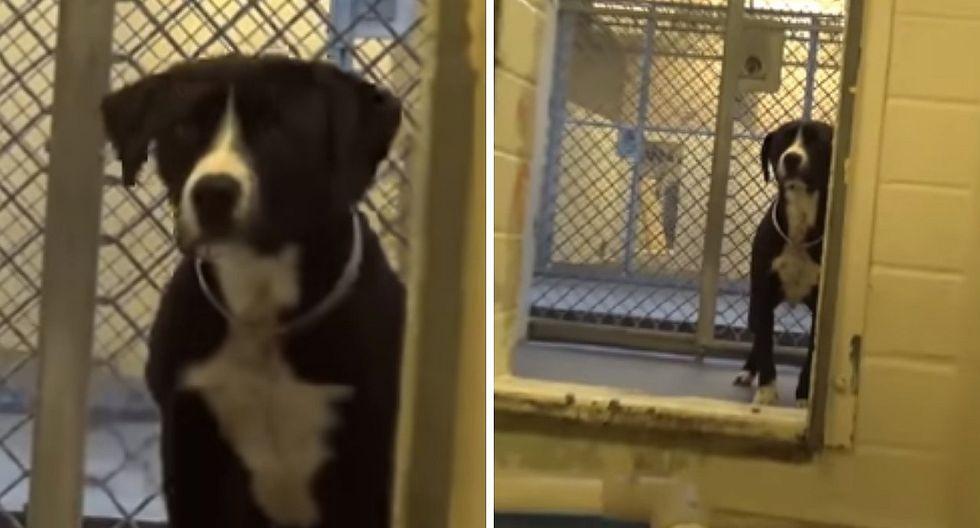 La tierna reacción de un perro al descubrir que será adoptado (VIDEO)