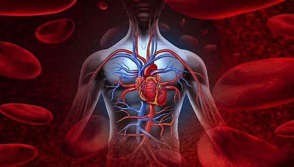 ¿Qué es el sistema circulatorio y cuál es su importancia?
