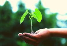 Conoce las partes de la planta y sus funciones