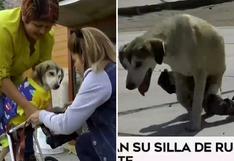 """Donan silla de ruedas a """"Rocky"""", el perro que fue víctima de delincuentes"""