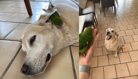 Perro y loro muestran amistad, algo cada vez más difícil de hallar entre los humanos que se creen superiores.