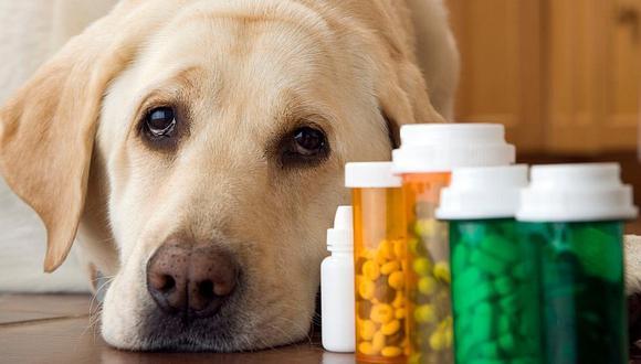 Conoce los riesgo de una medicación irresponsable en nuestras mascotas