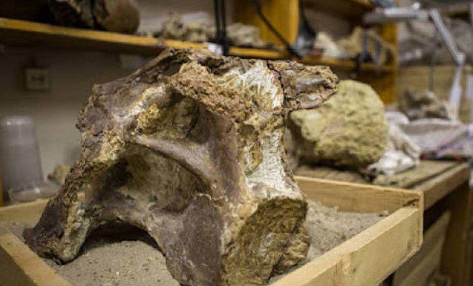 Científicos rusos descubren en Siberia un nueva especie de titanosaurio