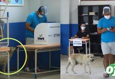 """Joven acudió a votar con su mascota 'La Covid': """"vine a votar con ella porque todos los candidatos son unos perros"""""""