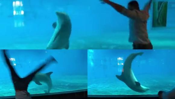 Un video viral muestra que además de extremadamente inteligentes, los delfines también son atléticos y saben hacer volteretas bajo el agua. | Crédito: @ant.Giovanni / TikTok
