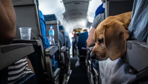 Vetan a los perros del Perú que viajen sin un complicado certificado de Estados Unidos.