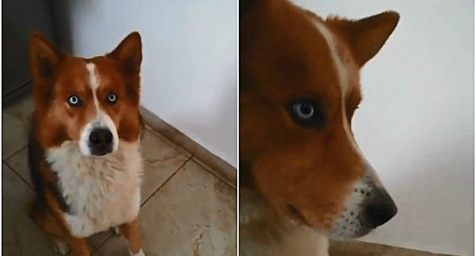El clip es protagonizado por Zarco, un perro de México que ha enamorado a millones en las redes sociales por su habilidad para seguir al pie de la letra las órdenes que le da su amo. (Foto: Facebook/Mascoarte Campeche)