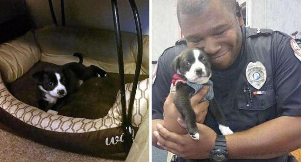Policía adopta a perro en albergue al que iba para arrestar a un empleado   FOTOS