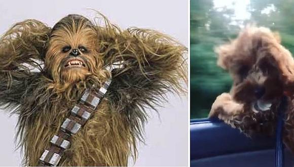 Perrito se transforma en 'Chewbacca' y ¡de la manera más insólita! (VIDEO)