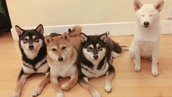 """Hina, el perro que se divierte """"estropeando"""" las fotos que le toma su dueña, cuenta con miles de seguidores en las redes sociales. (Foto: @yokokikuchi_ks / Instagram)"""