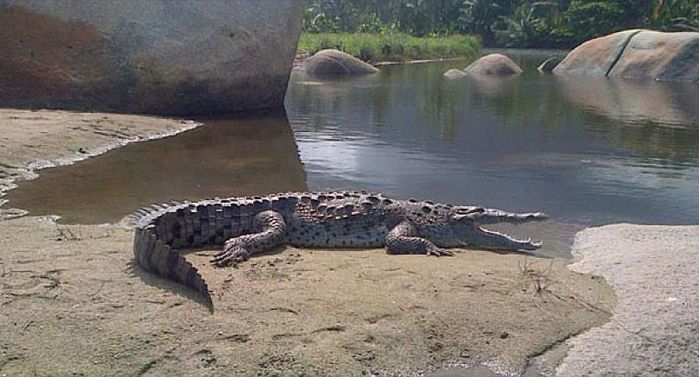 Un caimán de dos metros sorprende a turistas en famoso parque natural