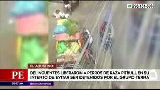 Delincuentes liberan a perros pitbull para evitar se capturados por la Policía en El Agustino