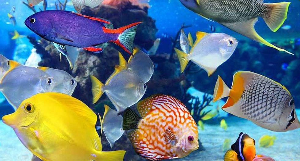 Peces: conoce las características de los animales acuáticos