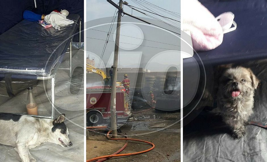 Familias afectadas por incendio en Comas piden veterinarios para sus mascotas