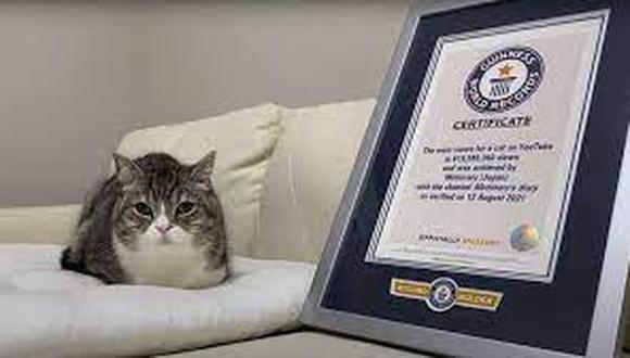 Motimaru es el gato más visto de su especie en YouTube y vive en Japón.