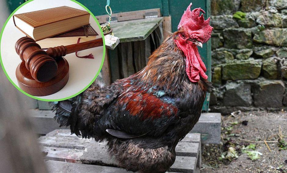 Familia demanda a un gallo por cacarear muy temprano