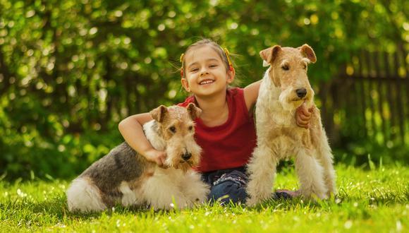 El 21 de julio se celebra el Día Mundial del Perro 2020, con el propósito de rendir homenaje a estos leales amigos de cuatro patas