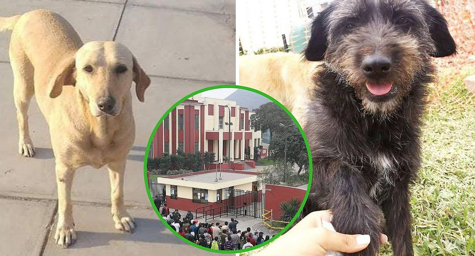 Dos perritos fueron envenenados en la UNI y piden hallar a los responsables