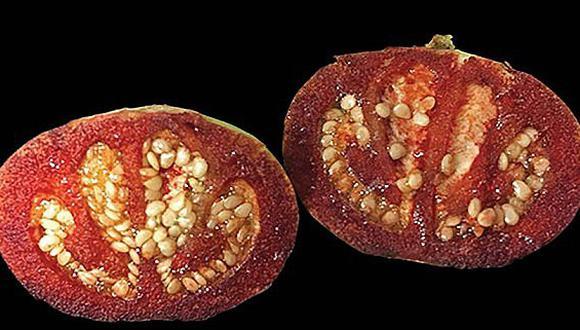 Descubren a planta que sangra y un gusano churro como nuevas especies