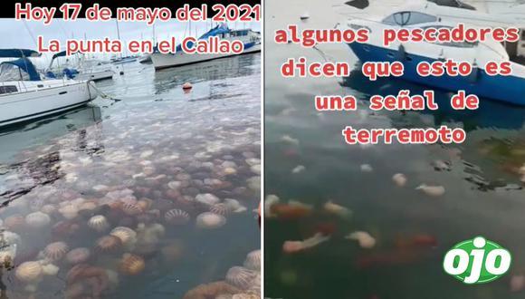 Aparecen cientos de malaguas en La Punta