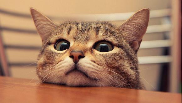 5 señales que demuestran que a tu gato le duele algo